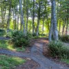 Forested picnic spots